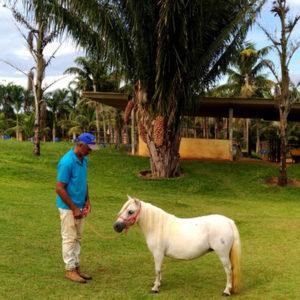 ponei-mini-horse-fêmea