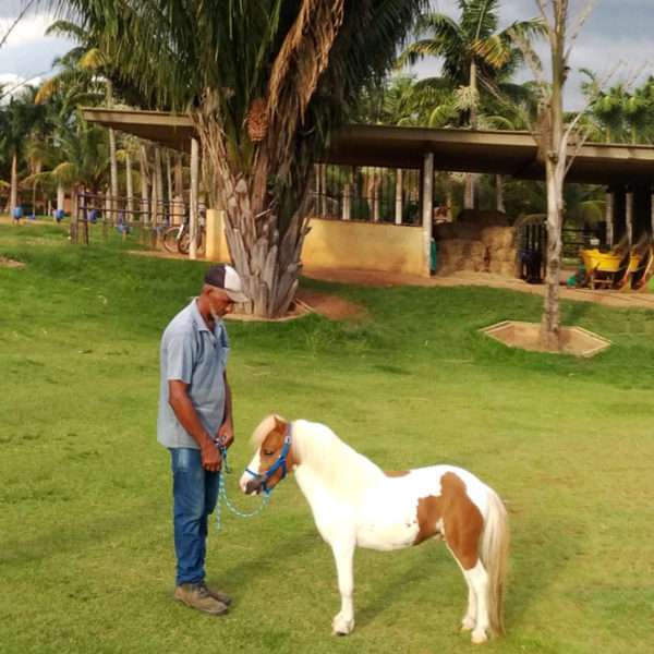 pônei-mini-horse-macho