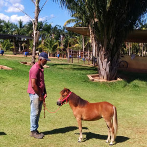 ponei-mini-horse