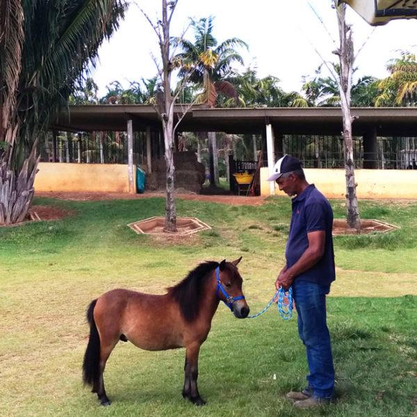 ponei.mini.horse