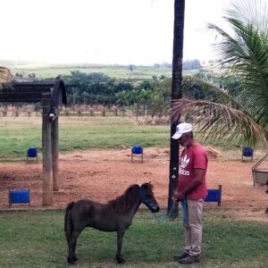 pônei-mini-horse-macho