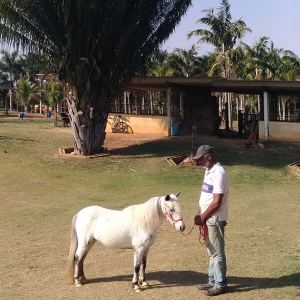 pôneis-mini-horse-fêmea